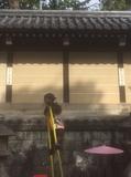 sarumawashi.jpg